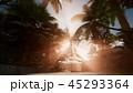 ヤシ 熱帯雨林 日差しのイラスト 45293364