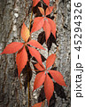 Red autumn leaves on tree trunk 45294326