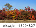 Colorful autumn trees under blue sky 45294327