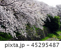 桜 花 春の写真 45295487