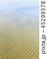 黄金の地表 45299378