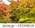 箱根美術館 紅葉 秋の写真 45299616