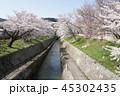 琵琶湖疏水口の桜 45302435