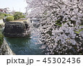 琵琶湖疏水口の桜 45302436