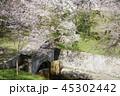 琵琶湖疏水口の桜 45302442