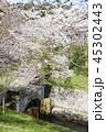 琵琶湖疏水口の桜 45302443