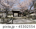 円満院門跡の桜 45302554
