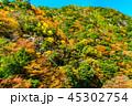 紅葉 山 森の写真 45302754