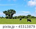 晴れ 牧場 放牧の写真 45313879