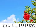 青空 晴れ 花の写真 45313893