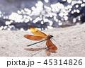 カワトンボ トンボ 昆虫の写真 45314826