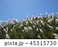 すすき 穂 秋の写真 45315730