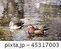 オシドリ 鳥 水鳥の写真 45317003