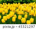 フラワー 花 春の写真 45321297