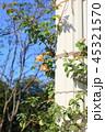 バラの花 ペガサス 45321570