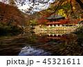 秋 森林 林の写真 45321611