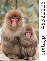 哺乳類 動物 猿の写真 45322126