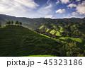 中国 農園 農場の写真 45323186