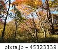 秋の霧降ノ滝 遊歩道と紅葉 45323339