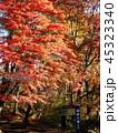 秋の霧降ノ滝 遊歩道と紅葉 45323340