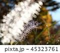 逆光に輝く綿毛の水玉 45323761