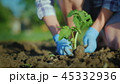 Plant a tomato seedlings in the ground. Hands gently press the ground around the young sprout 45332936