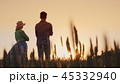 Two farmers man and woman standing in a wheat field watching the sunset. Lower view angle 45332940