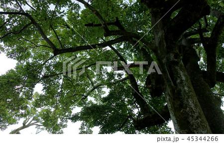 豊かな緑 木 自然 Rich green tree nature 45344266