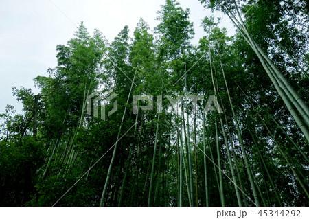 日本 京都 緑の竹藪 竹林 Japan Kyoto green bamboo forest 45344292