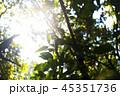 ジャングルの午後の木漏れ日 ボルネオ島 45351736