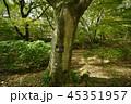 エノキ(榎) 45351957