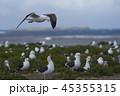 鳥 海 かもめの写真 45355315