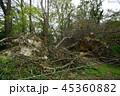 台風21号(2018年)の爪痕 大阪市立大学理学部附属植物園 45360882