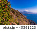 (静岡県)椿の花咲く薩埵峠・富士山 45361223