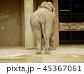 ゾウのおしり 45367061