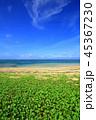 西表島 リゾート 南風見の写真 45367230