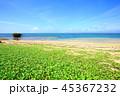 西表島 リゾート 南風見の写真 45367232
