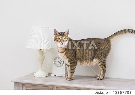 机に乗った猫 45367703