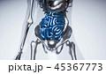 腹部 解剖学 ボディのイラスト 45367773