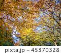 植物 葉 紅葉の写真 45370328