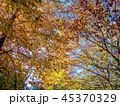 植物 葉 紅葉の写真 45370329