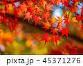 紅葉・秋イメージ 45371276