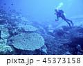 サンゴ 珊瑚 ダイバーの写真 45373158