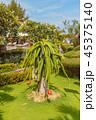 Pitaya Cactus or Dragon Fruit 45375140
