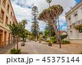 Street with Big Dragon Tree at La Laguna 45375144