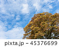 空 雲 樹木の写真 45376699