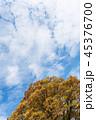 空 雲 樹木の写真 45376700