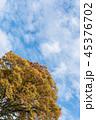 空 雲 樹木の写真 45376702