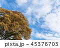 空 雲 樹木の写真 45376703