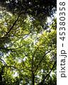 ジャングル ボルネオ島 45380358